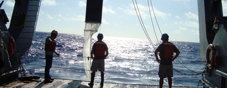 Plankton Tow: Bermuda