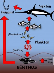 Toxic Algae Food Web